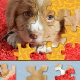 Скриншот Adorable Puppy Jigsaw Puzzle