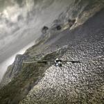 Скриншот MorphShift Wars – Изображение 7
