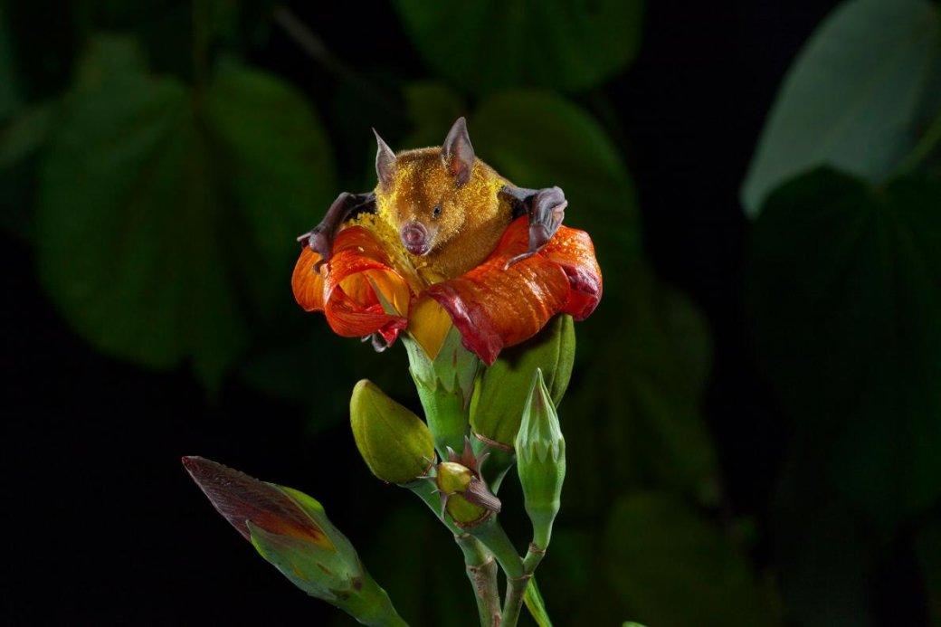 Хэллоуин еще некончился: лучшие фотографии летучих мышей отNatGeo - Изображение 5