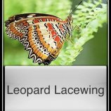 Скриншот Butterflies! – Изображение 2