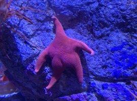 Патрик, этоты? Винтернете завирусилось фото морской звезды, напоминающей героя «Губки Боба»