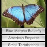 Скриншот Butterflies! – Изображение 3