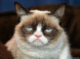 Скончалась кошка, которую весь мир знает по мему Grumpy Cat