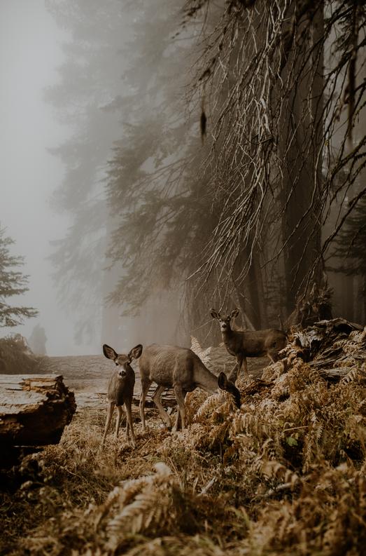 Великолепно! Опубликованы победители открытого конкурса фотографий Sony WPA 2018. - Изображение 10