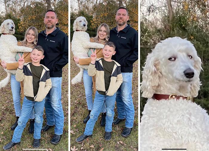 Галерея дурацких рождественских фотографий, которые испортили собаки | Канобу - Изображение 5913